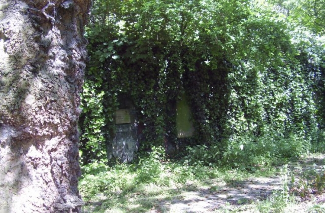 Left-hand-side-of-the-Catacombs-covered-in-Ivy-.jpg 2008